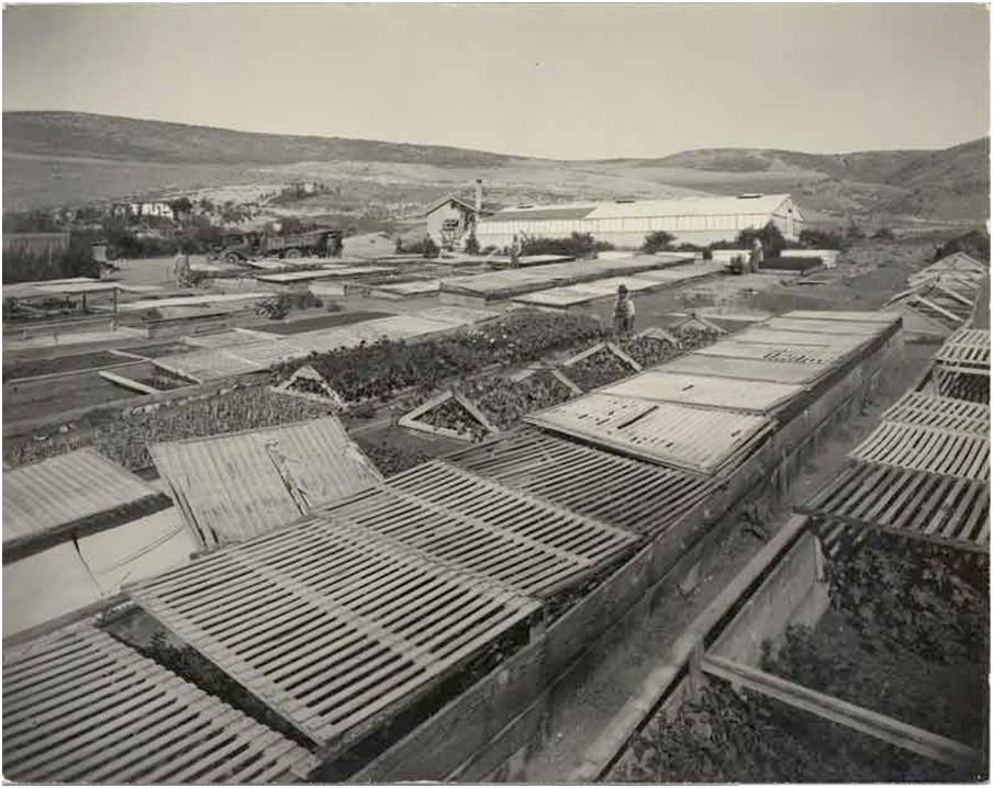 Lunada Bay Circa 1929